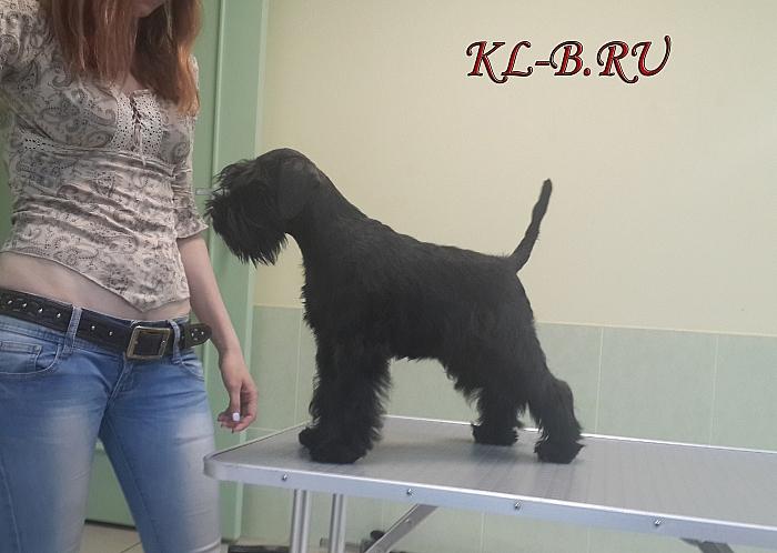 http://kl-b.ru/uploads/1434290498.JPG