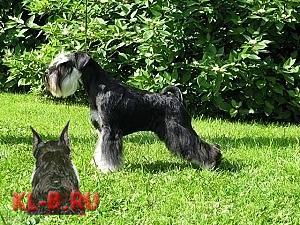 http://kl-b.ru/wwatermark.php?image=uploads/1346270795.JPG