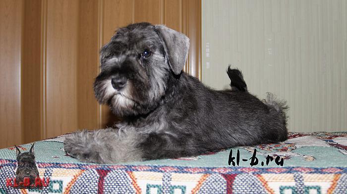 http://kl-b.ru/wwatermark.php?image=uploads/1394820954.JPG