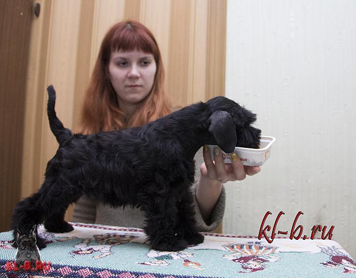 http://kl-b.ru/wwatermark.php?image=uploads/1427834162.JPG