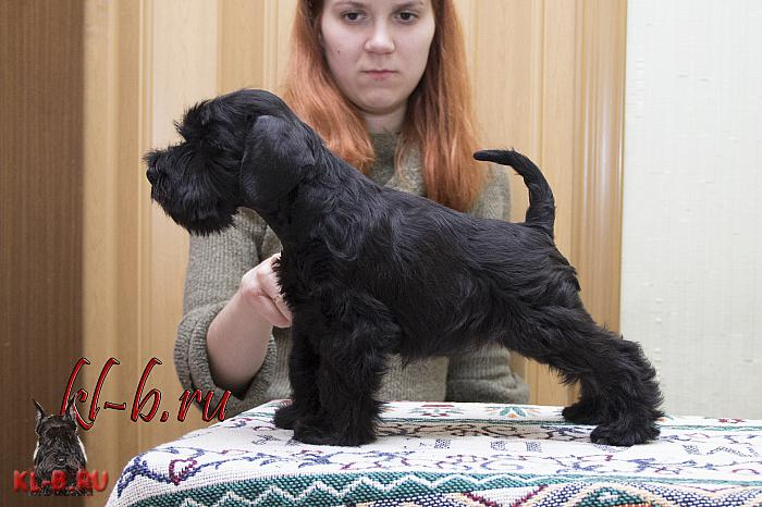 http://kl-b.ru/wwatermark.php?image=uploads/1427834927.JPG