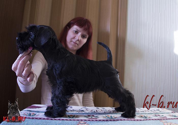 http://kl-b.ru/wwatermark.php?image=uploads/1429457664.JPG