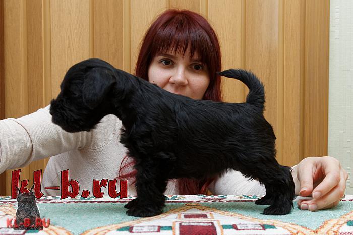http://kl-b.ru/wwatermark.php?image=uploads/1458552858.JPG