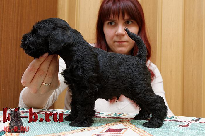 http://kl-b.ru/wwatermark.php?image=uploads/1458552933.JPG